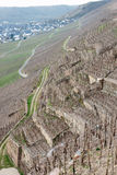 Riesling vineyards on Moselle river Royalty Free Stock Photo