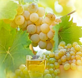 Riesling and wine Royalty Free Stock Photo