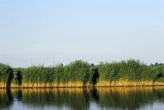 Riet bij het meer Neusiedl Stock Fotografie