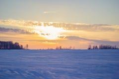Riet bij zonsondergang Stock Afbeeldingen