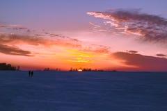 Riet bij zonsondergang Stock Afbeelding