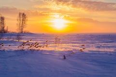 Riet bij zonsondergang Royalty-vrije Stock Foto's
