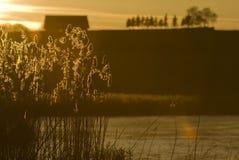 Riet in de zonsondergang royalty-vrije stock foto