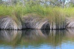 Riet in een rivier Stock Foto's