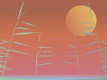 Riet en de zonsondergang Stock Afbeelding