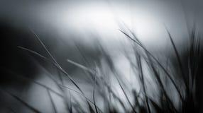 Riet en gras met vlot panorama als achtergrond Stock Foto's