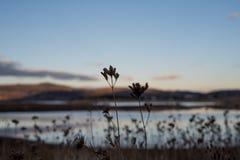 Riet en het landschap van het bergmeer Royalty-vrije Stock Foto's