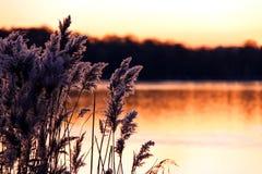 Riet en stormlopen op een rivierbank bij zonsondergang Royalty-vrije Stock Foto's