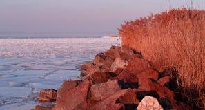 Riet in het ijs wordt opgesloten dat Royalty-vrije Stock Afbeelding