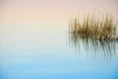 De zomerillustratie met meer en riet stock foto 39 s afbeelding 32776873 - Riet voor struik ...