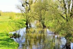Riet in kleine rivier Hoge Definitievideo: 29 stock foto's