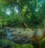 Riet in kleine rivier Hoge Definitievideo: 29 Stock Foto