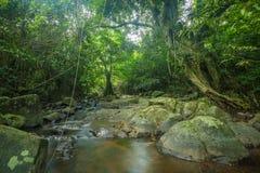 Riet in kleine rivier Hoge Definitievideo: 29 Royalty-vrije Stock Afbeelding