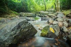 Riet in kleine rivier Hoge Definitievideo: 29 Stock Afbeeldingen