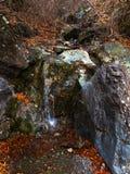 Riet in kleine rivier Hoge Definitievideo: 29 Stock Fotografie