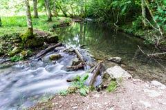 Riet in kleine rivier Hoge Definitievideo: 29 Royalty-vrije Stock Foto