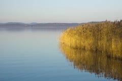 Riet in Meer Balaton royalty-vrije stock afbeeldingen