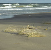 Riet op beach.JH Royalty-vrije Stock Foto's