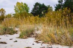 Riet op de kust van de zeekust in de Golf van Riga, Letland, Kurzeme royalty-vrije stock afbeelding