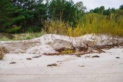 Riet op de kust van de zeekust in de Golf van Riga, Letland, Kurzeme royalty-vrije stock fotografie