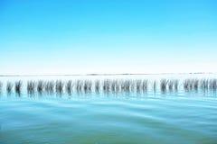 Riet op het Meer stock foto's