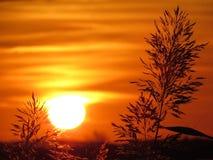 Riet tijdens zonsondergang Stock Foto's