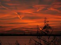 Riet tijdens zonsondergang Stock Foto