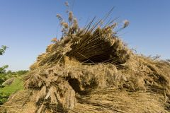 Rietbalen, Reed Bales images stock