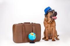 Rietcorso in blauwe hoed met koffer Royalty-vrije Stock Afbeeldingen