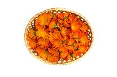Rieten mand met de medische die bloemen van de calendulagoudsbloem op wit worden geïsoleerd Royalty-vrije Stock Afbeelding