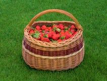 Rieten mandhoogtepunt van rijpe tuinaardbeien op groen gras Verse inlandse aardbei in mand stock foto