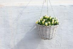 Rieten pot met gele bloem royalty-vrije stock foto's