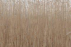 Rietgebied in abstracte vorm Stock Foto's