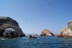 Riff im Ozean Stockfotos