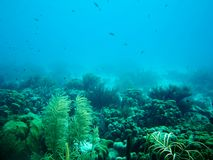 Riff von Bonaire Lizenzfreie Stockfotos