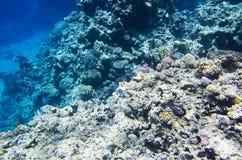 Rifffelsen von den Korallen Lizenzfreie Stockfotografie