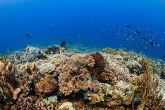 Rifffische und -korallen auf einem tropischen Korallenriff Lizenzfreies Stockbild