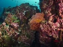 Riffkoralle und Rifffische Lizenzfreies Stockbild