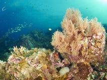Riffkoralle und Rifffische Stockbilder