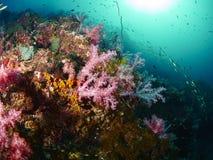 Riffkoralle und Rifffische Lizenzfreie Stockfotos