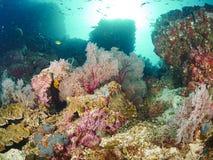 Riffkoralle und Rifffische Stockfoto