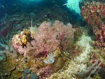 Riffkoralle und Rifffische Stockfotos
