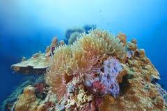 Riffkoralle und Rifffische Lizenzfreie Stockbilder