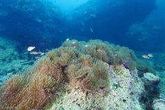 Riffkoralle und Rifffische Lizenzfreies Stockfoto
