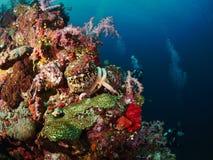 Riffkoralle und Rifffische mit seastar Lizenzfreies Stockbild