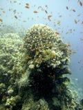 Riffszene mit Koralle und Fischen Stockfotografie