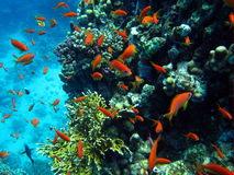 Riffszene mit orange Fischen Stockbild
