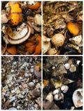 Rifiuti alimentari che riciclano insieme Fotografia Stock