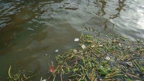 Rifiuti e giacinto d'acqua nel fiume di Chaopraya di inquinamento fotografia stock
