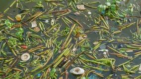 Rifiuti e giacinto d'acqua nel fiume di inquinamento immagine stock libera da diritti